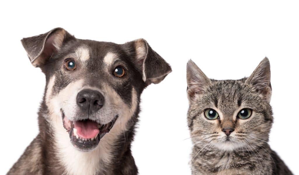 Should Cats and Dogs have Pet Trusts?